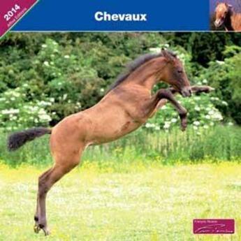 Couverture du livre « 2014 Chevaux » de Collectif aux éditions Affixe