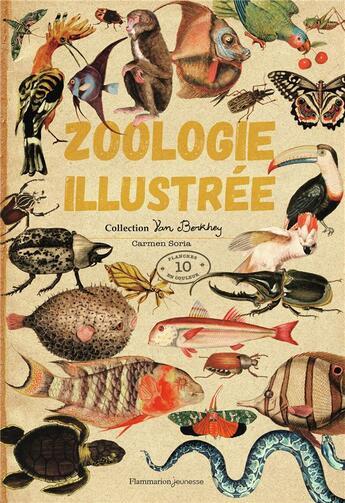 Couverture du livre « Zoologie illustrée » de Carmen Soria aux éditions Pere Castor