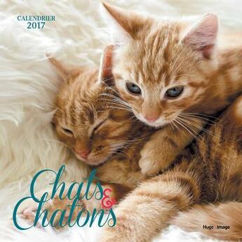 Couverture du livre « Calendrier mural 2016 ; chats & chatons » de Collectif aux éditions Hugo Image