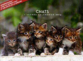 Couverture du livre « Agenda calendrier chats 2014 » de Collectif aux éditions Hugo