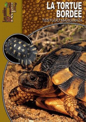 Couverture du livre « La tortue bordée ; testudo marginata » de Mario Herz aux éditions Animalia
