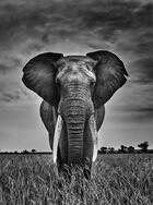 Couverture du livre « Mémoires d'éléphant » de Kyriakos Kaziras aux éditions Vilo