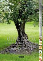 Couverture du livre « Oliviers & Co ; l'huile d'olive grand cru ; émotions, sensations, créations » de Jean-Francois Mallet et Albert Baussan et Eric Verdier aux éditions Glenat