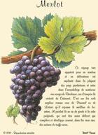 Couverture du livre « Merlot ; cartes postales » de Collectif aux éditions Benoit France