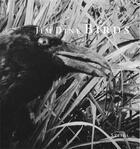 Couverture du livre « Jim Dine Birds /Anglais » de Jim Dine aux éditions Steidl
